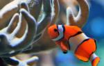 К чему снится рыба с зубами