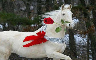 Увидеть во сне белую лошадь