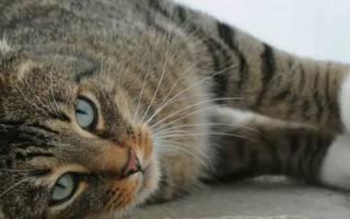 Умирающая кошка во сне
