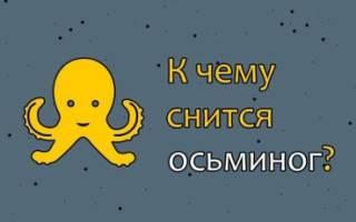 К чему снится осьминог живой