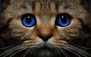 К чему снится смерть кота который жив