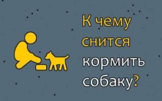 К чему снится кормить собаку хлебом