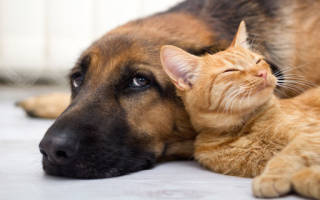 Сон про животных