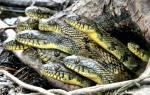 Увидеть во сне много змей