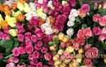 К чему снится много цветов живых