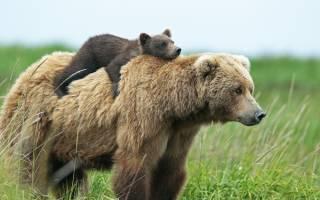 Видеть во сне медвежонка для женщины