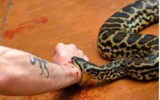 Сон укус змеи в руку