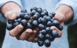 Сонник к чему снится виноград