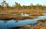 Видеть во сне болото