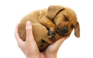 К чему снится держать собаку на руках