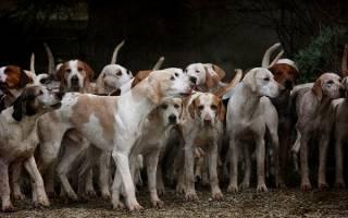 К чему снится много собак на улице
